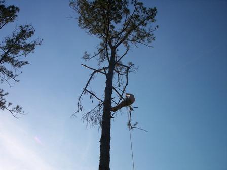sam-hill-tree-care.jpg
